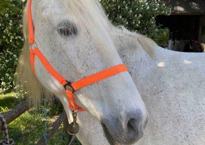 Accueil chevaux 2