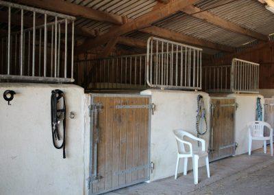 Accueil chevaux 4